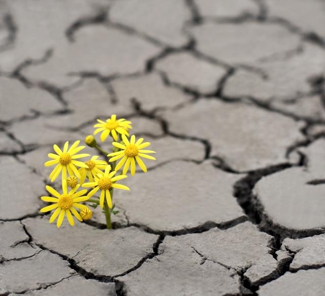 climate-hope.jpg